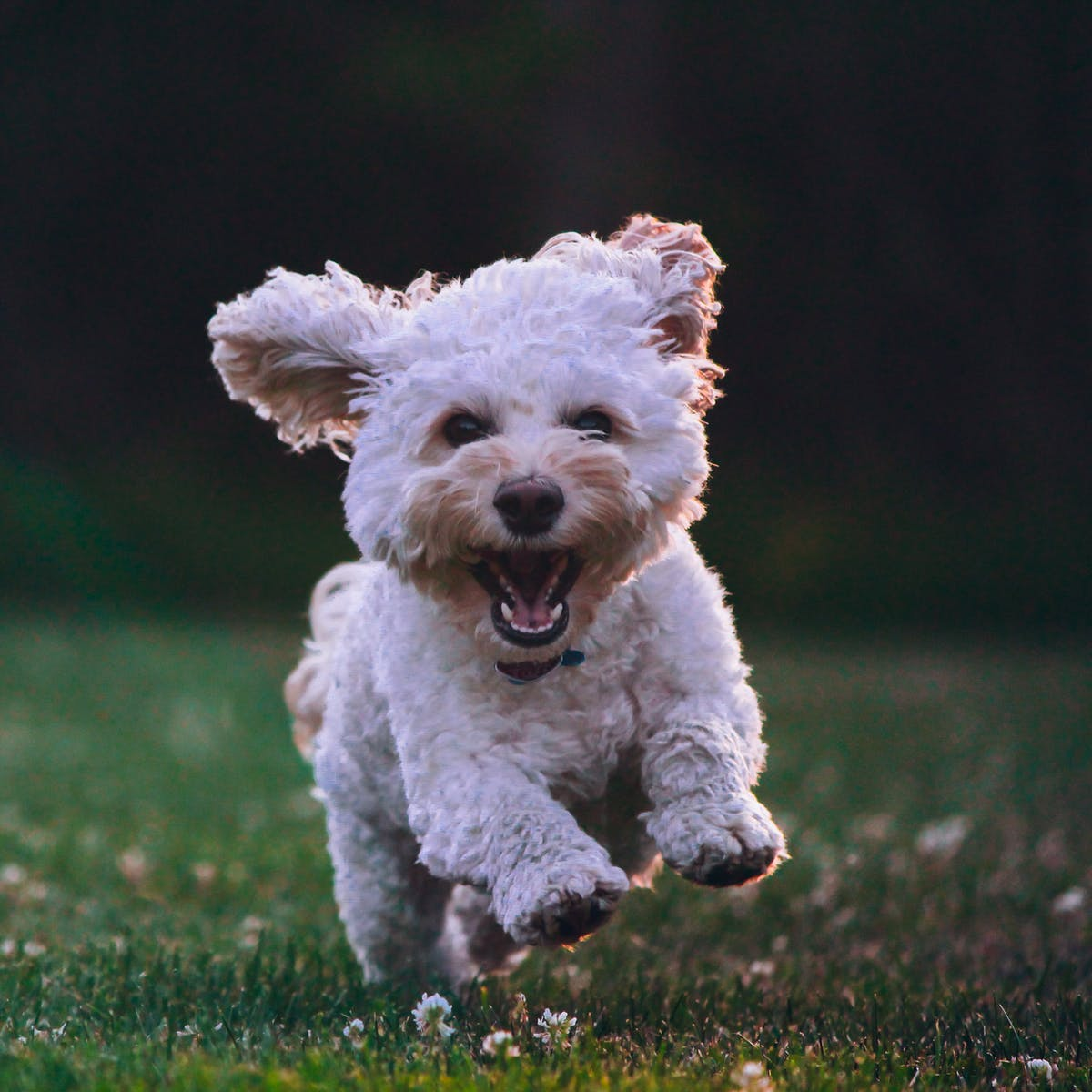 Is Your Dog Actually Happy? An Animal Behaviorist Explains