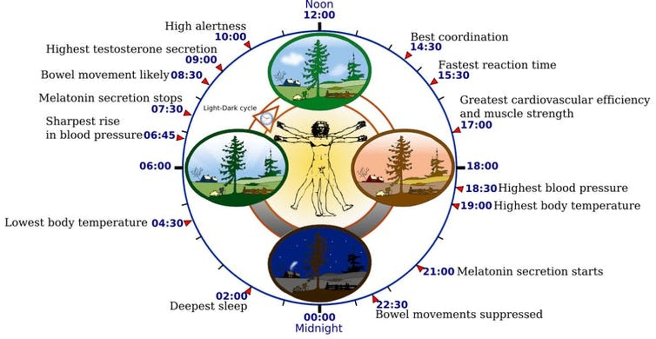 The circadian rhythm orchestrates many biological processes, including digestion, immune function, and blood pressure, all of which rise and fall at specific times of the day. Misregulation of the circadian rhythm can have adverse effects on metabolism, cognitive function, and cardiovascular health.