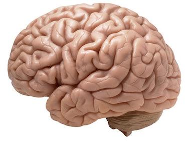 Here are 15 Job Openings at Neuralink, Elon Musk's Brain Startup