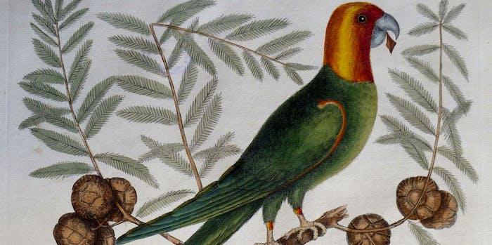 The natural history of Carolina, Florida, and the Bahama Islands, 1754 Psitticus Caroliniensi - The Parrot of Carolina (19119544423)