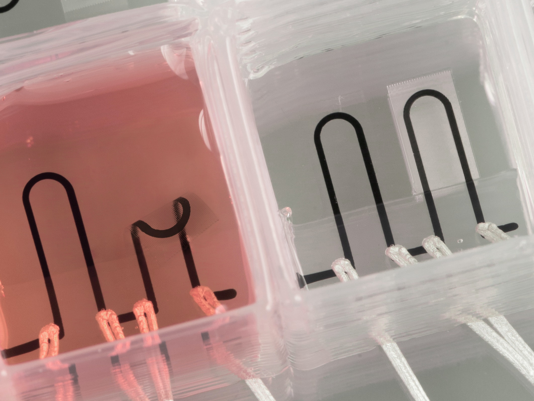 Harvard's Heart-on-a-Chip Is the Future of Medical Studies
