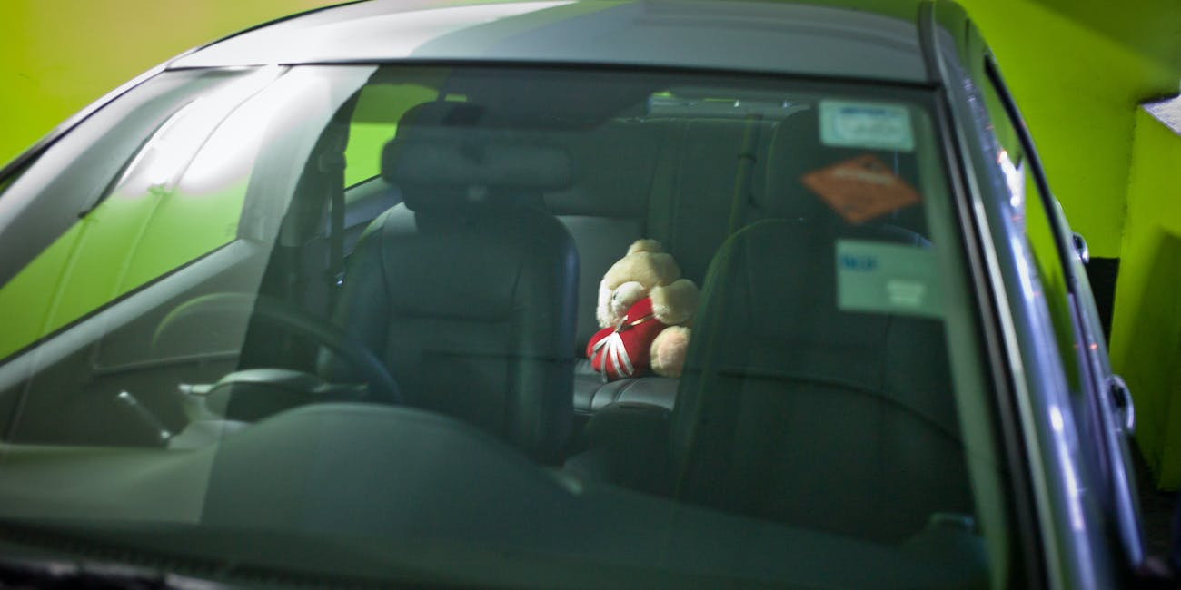 the backseat bear