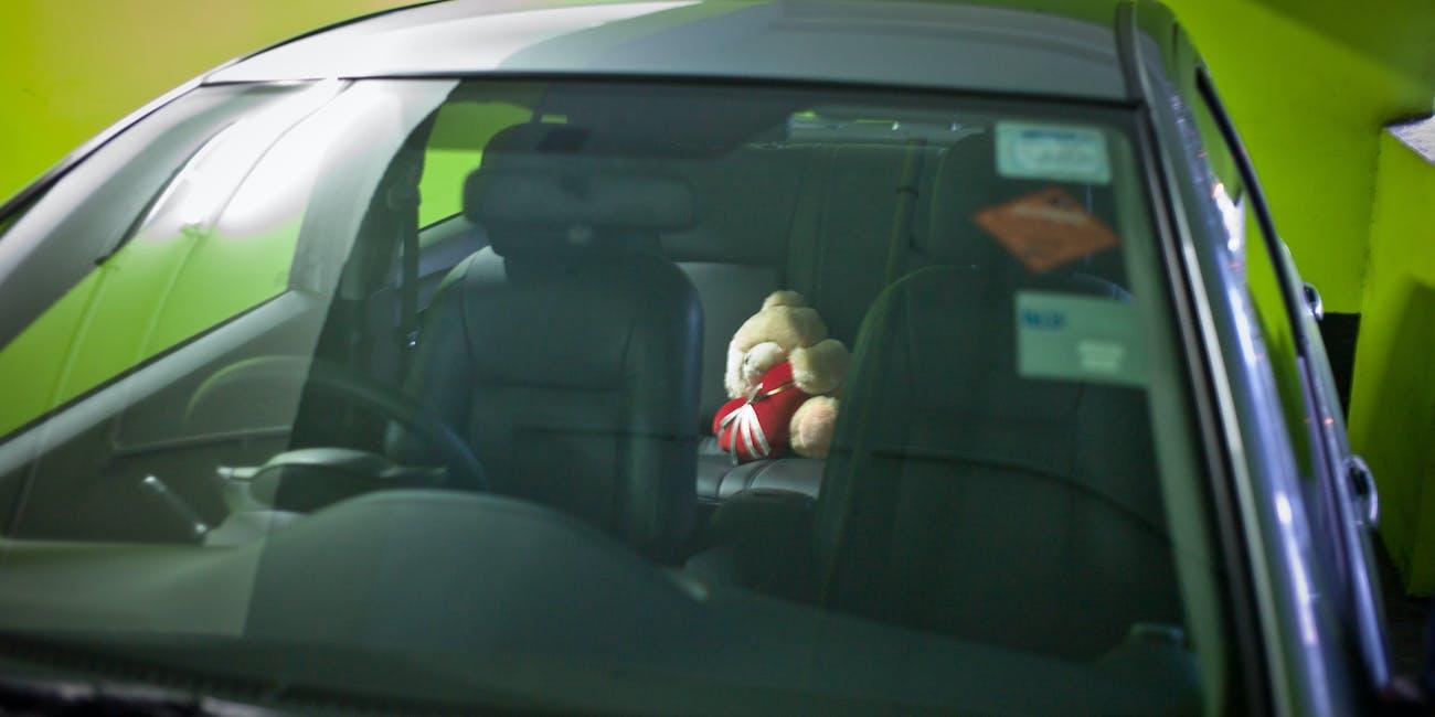 the backseat bear