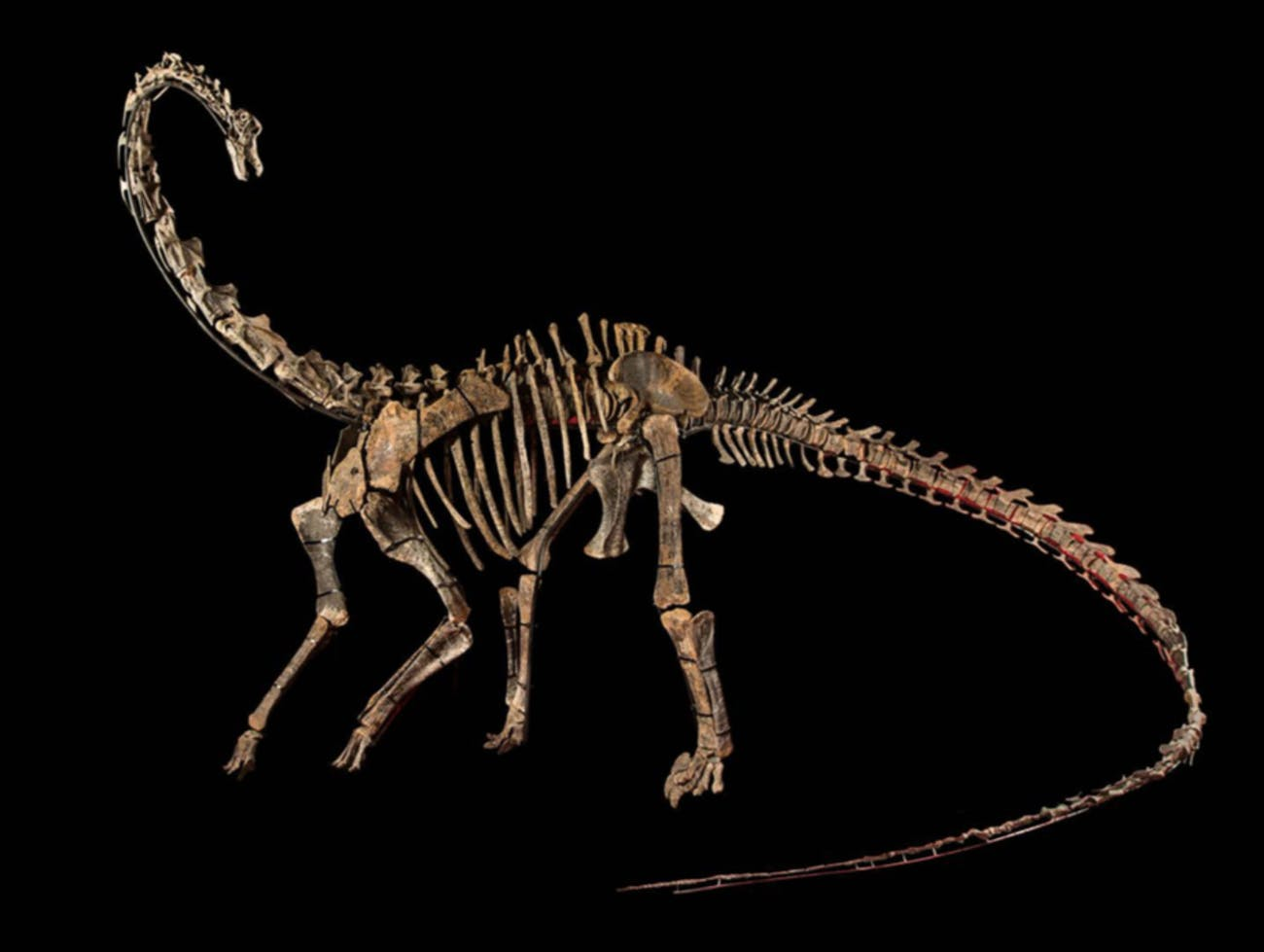 Two Dinosaur Skeletons Are on Sale in Paris For $1 4 Million