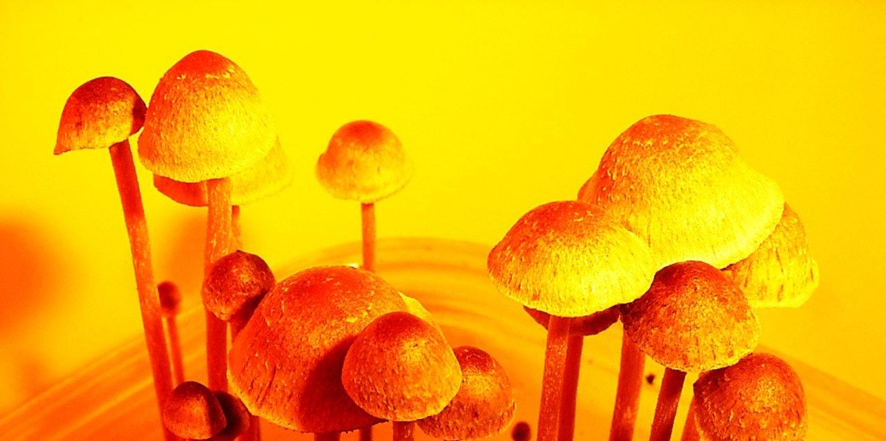 Magic Mushrooms Are Shaping the Future of Psychiatric Treatment