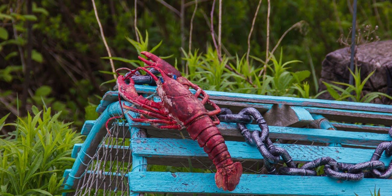 Do lobsters feel pain?