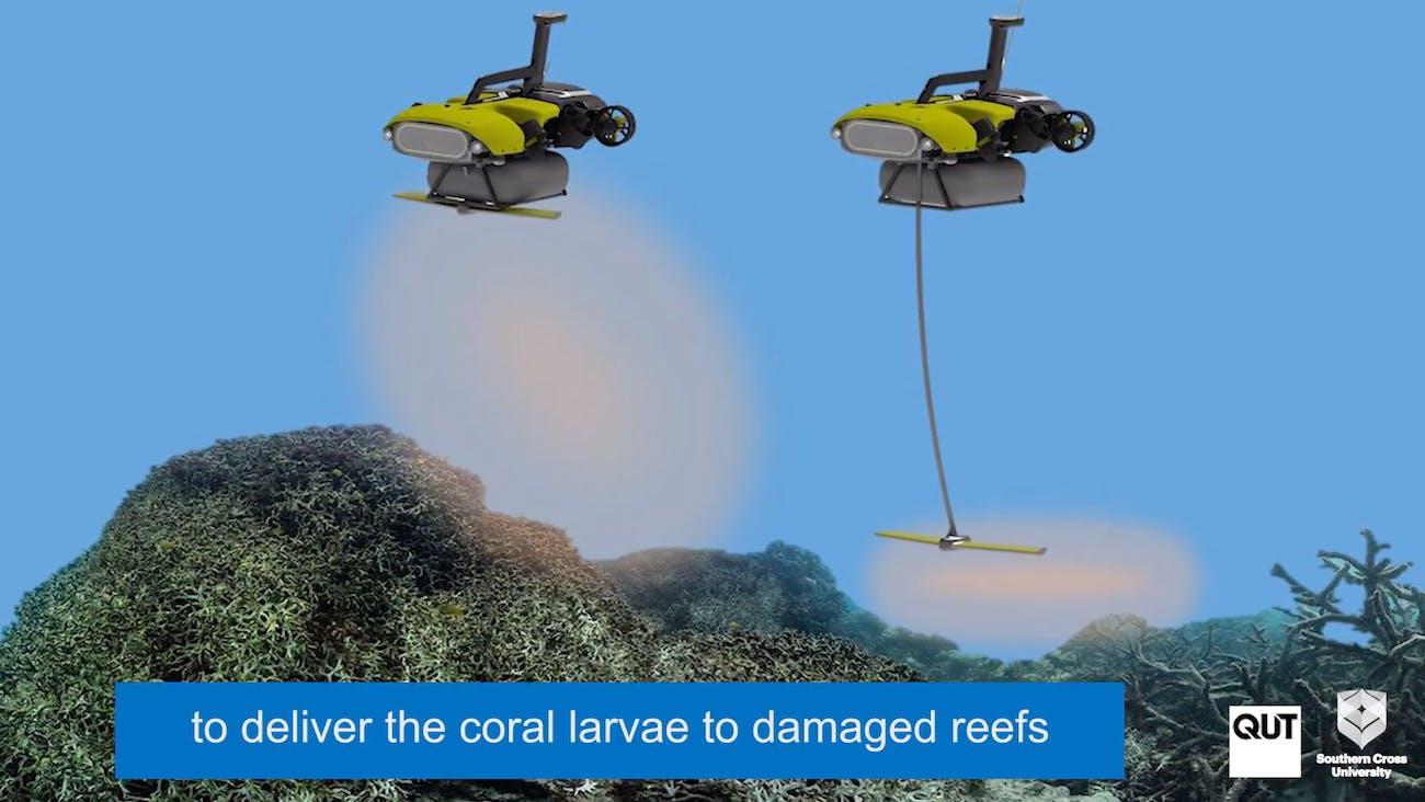 larvalbot coral robot