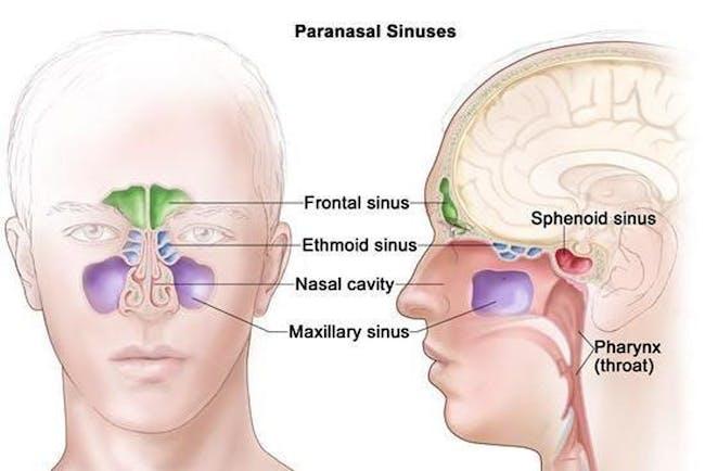sinus cavities snorting chocolate other drugs