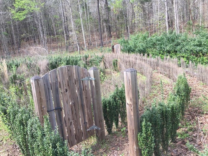 Internet users have been searching for a way to save John B. McLemore's hedge maze from the S-Town podcast.