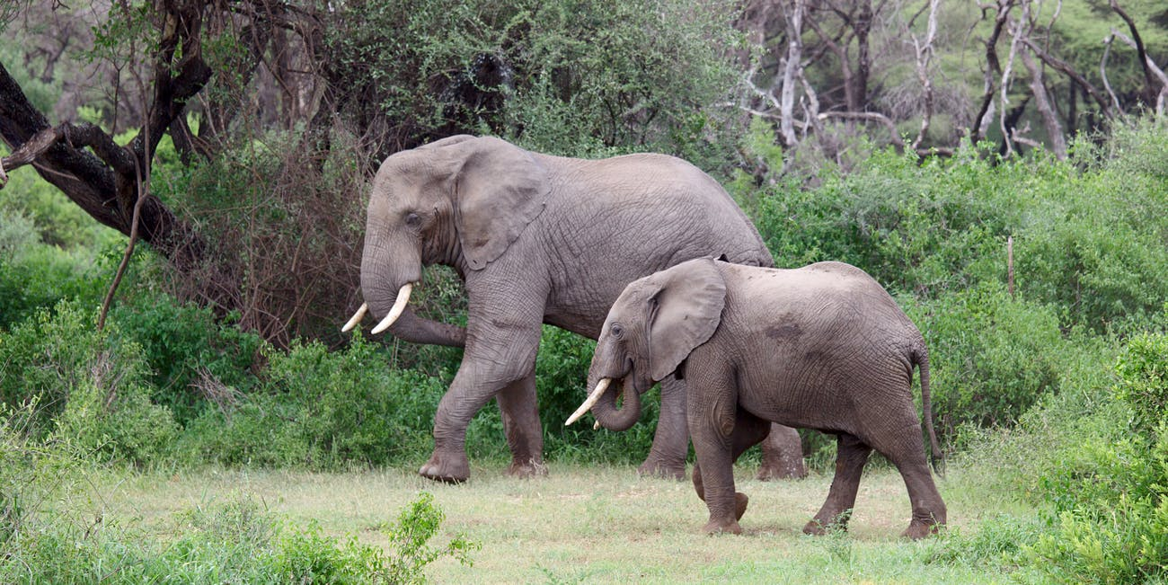 Elephants at Lake Manyara National Park
