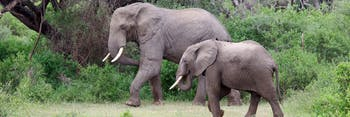 Elephants at Lake Manyara National Park