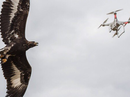 The French Air Force Is Training Eagles to Hunt Drones