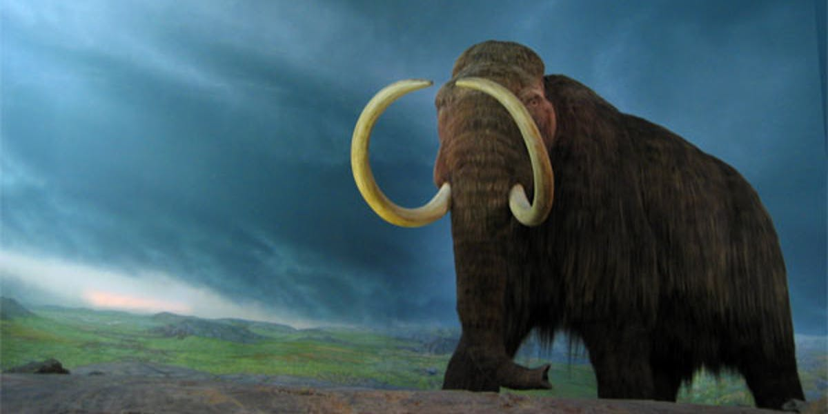 Ancient Male Wooly Mammoths Lacking Female Leaders Wound Up Dead