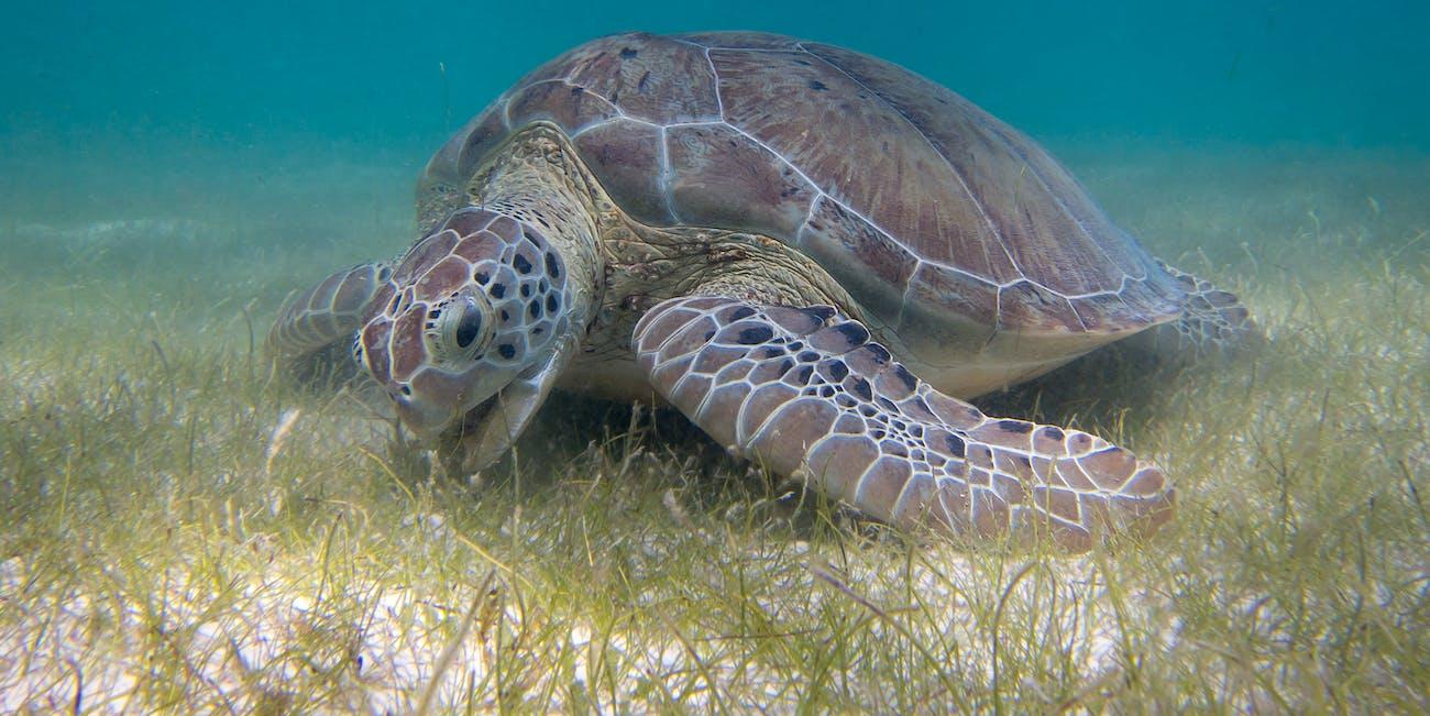seagrass