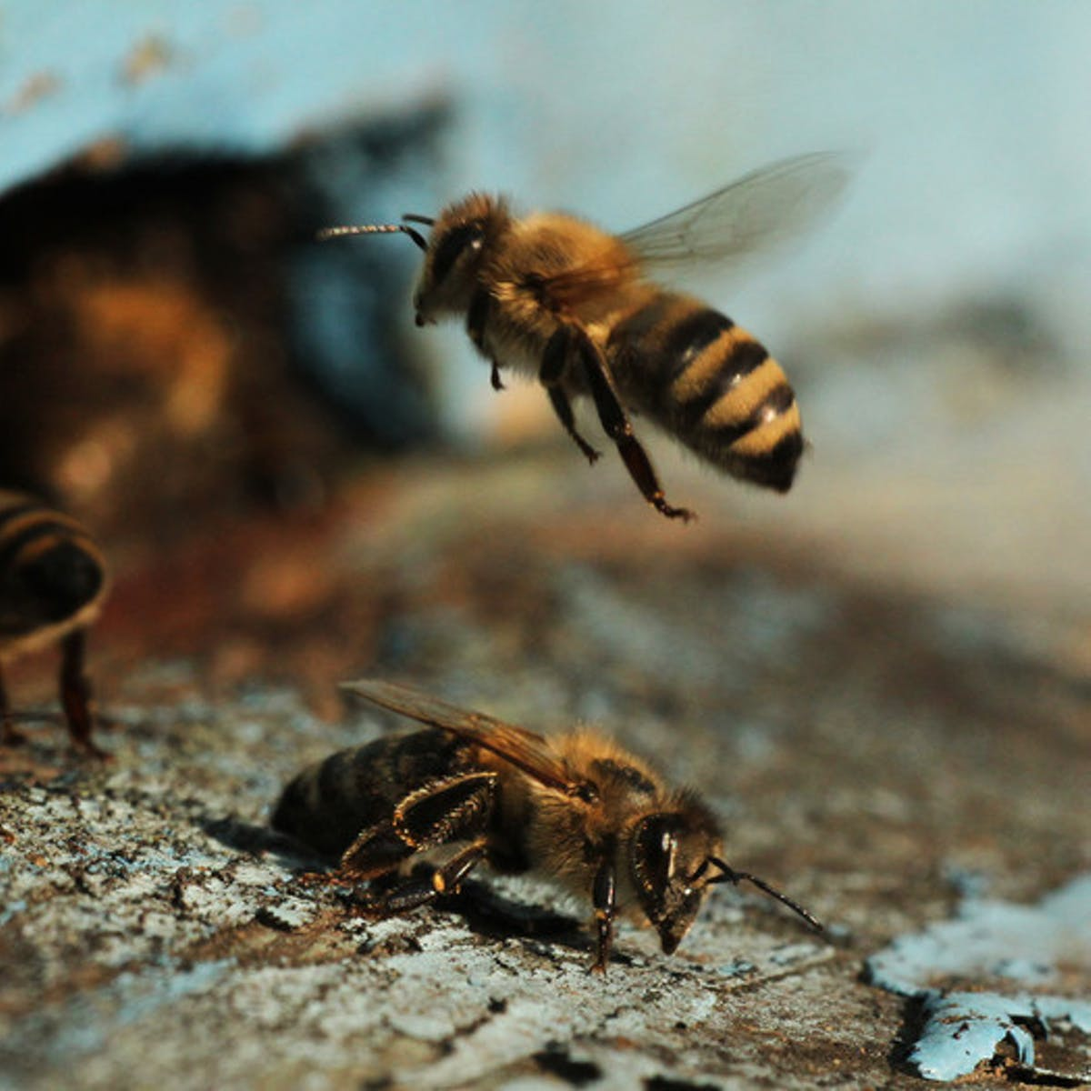 Bees Can Grasp This Deceptively Challenging Mathematical Concept
