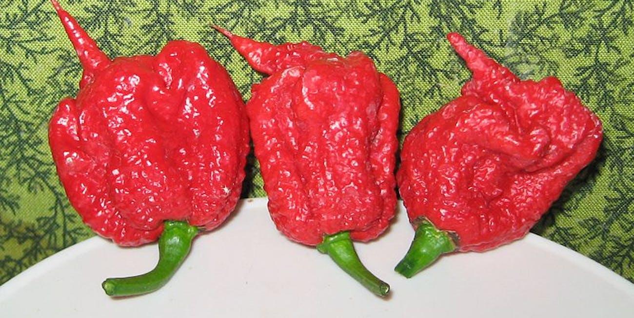 Carolina Reaper, hot pepper