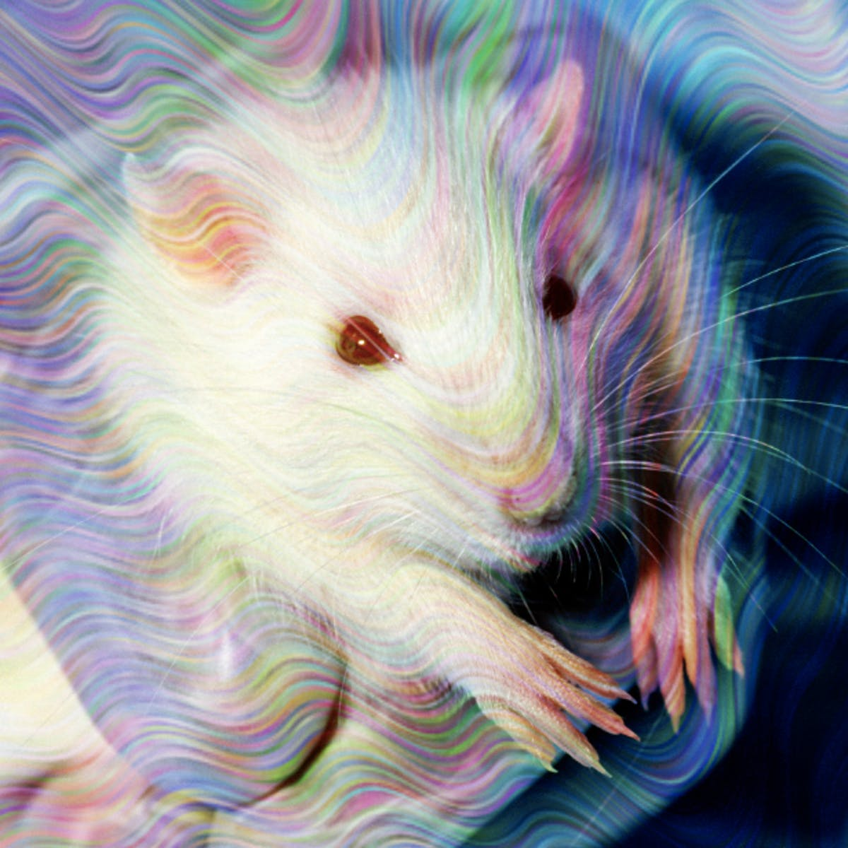 Microdosing: DMT Reduced Fear and Anxiety in Rats but Also