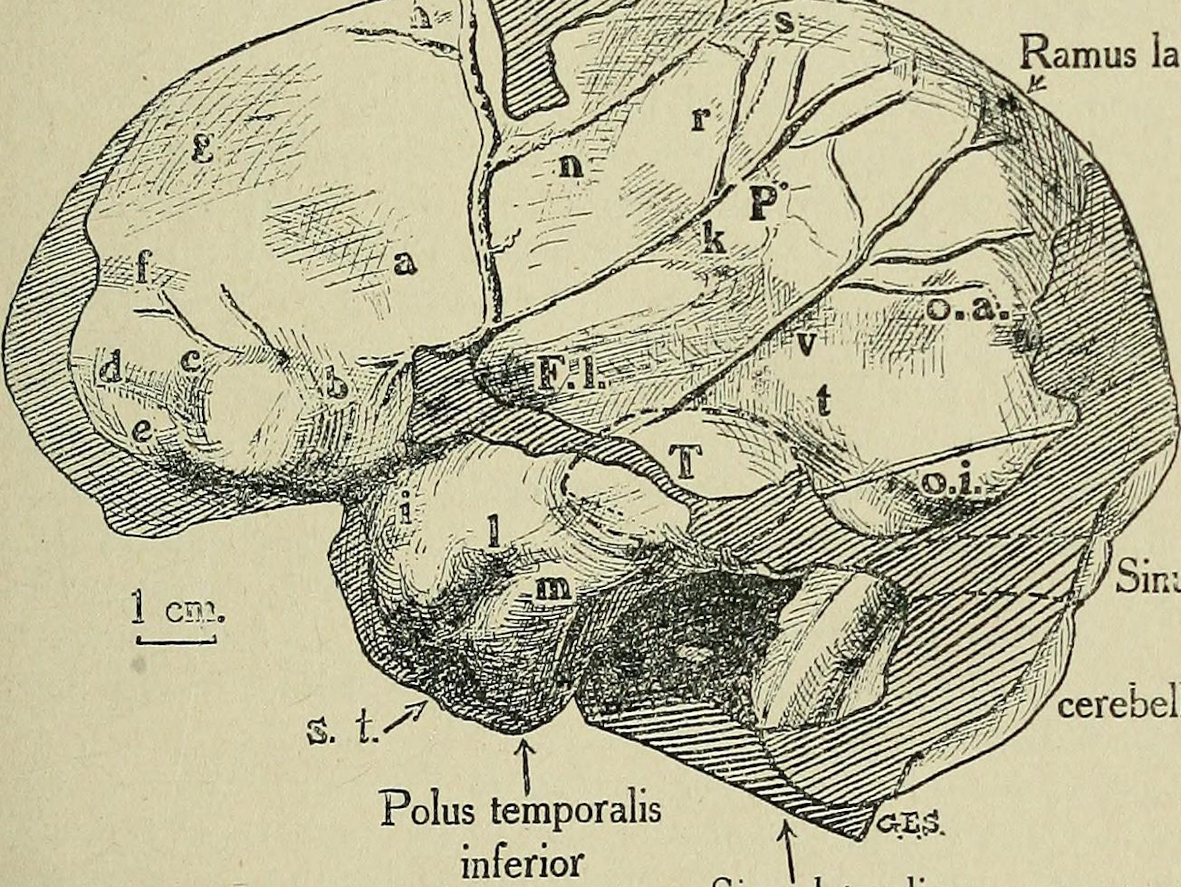 "Image from page 226 of ""The Quarterly journal of the Geological Society of London"" (1845)"
