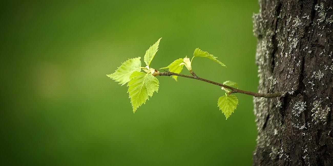blossom, spring, leaf