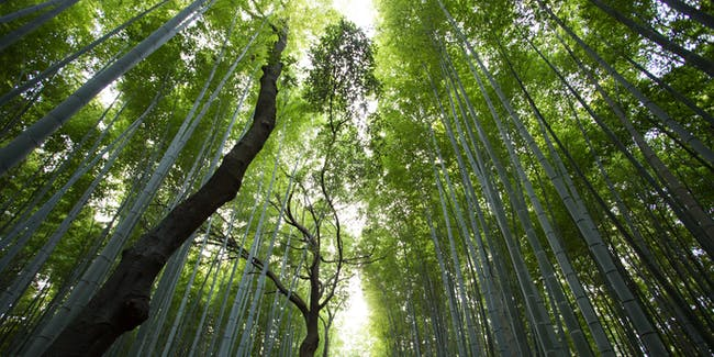 climate change forests