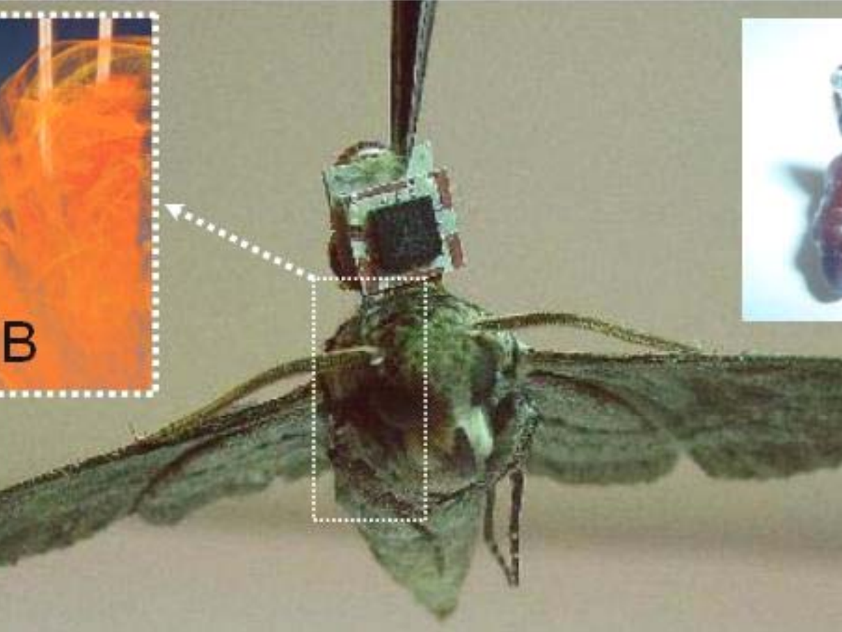 The Odd History of DARPA's Cyborg Insect Sentinels