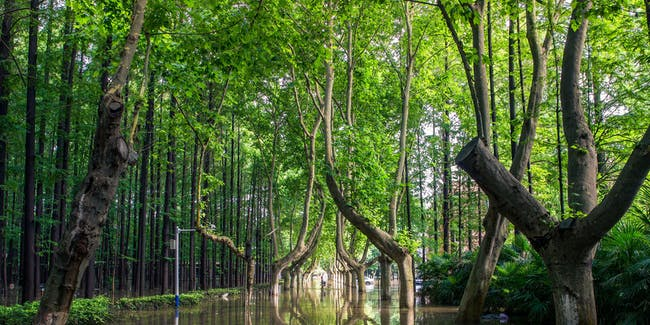 Is looking at this forest the same to your brain as actually being there?