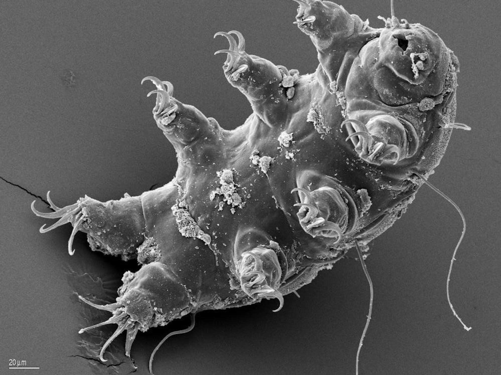 microbiomes Tardigrade bill miller esa nasa