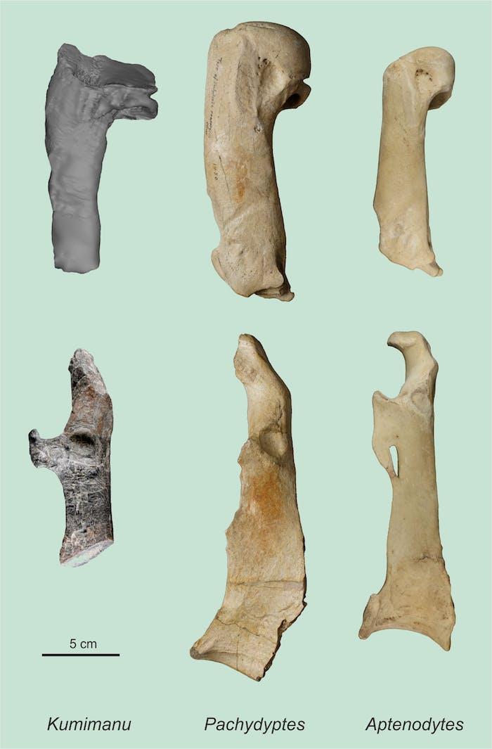 bone comparison