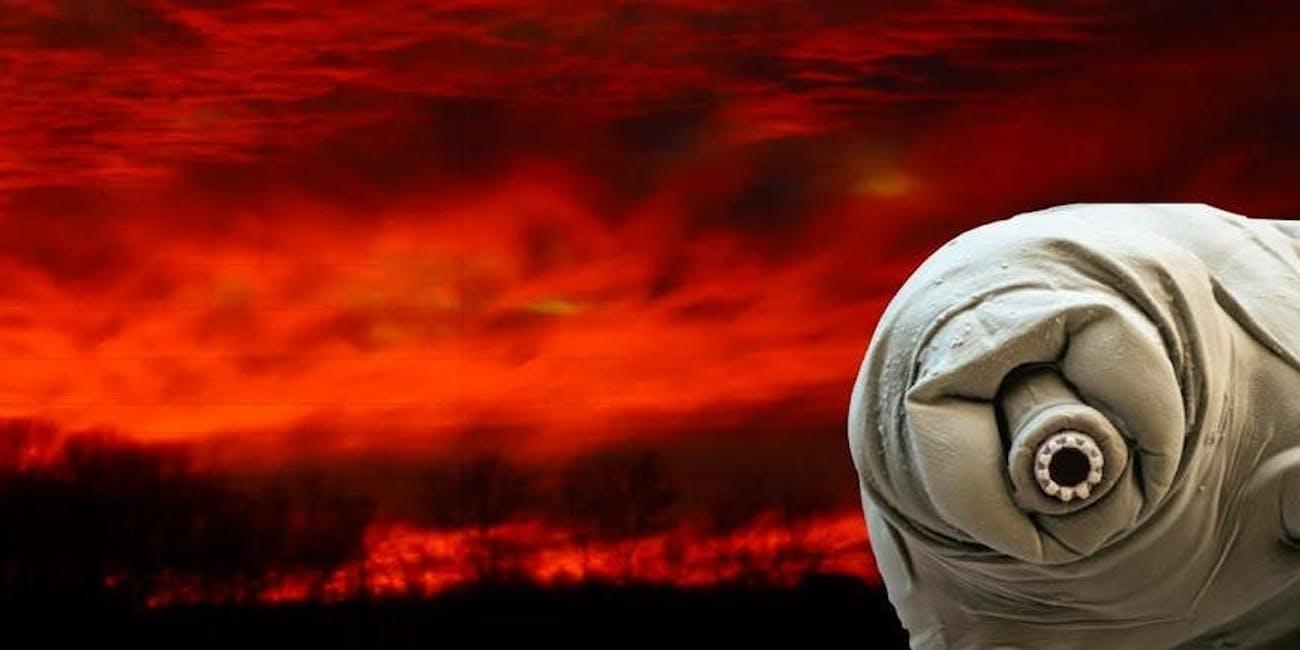 apocalypse proof tardigrade in motion water bear extremophile