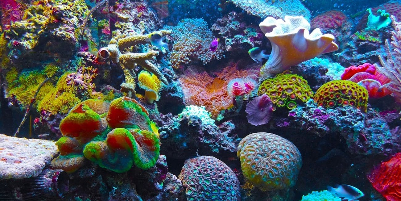 How Is Coral So Colorful in Netflix\'s \'Chasing Coral\'? | Inverse