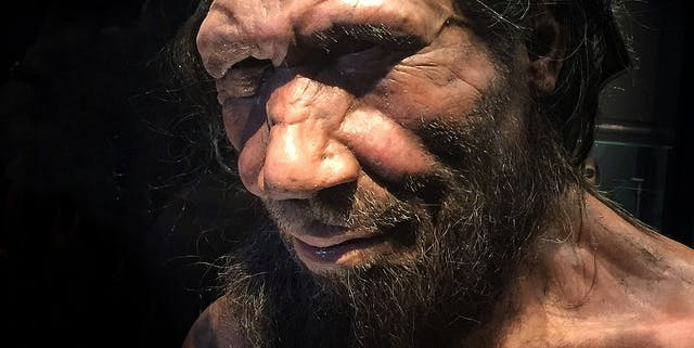 New model shows why Neanderthals were doomed from the start.