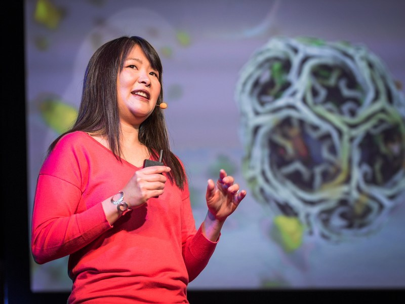 Iwasa speaking at TED in 2014