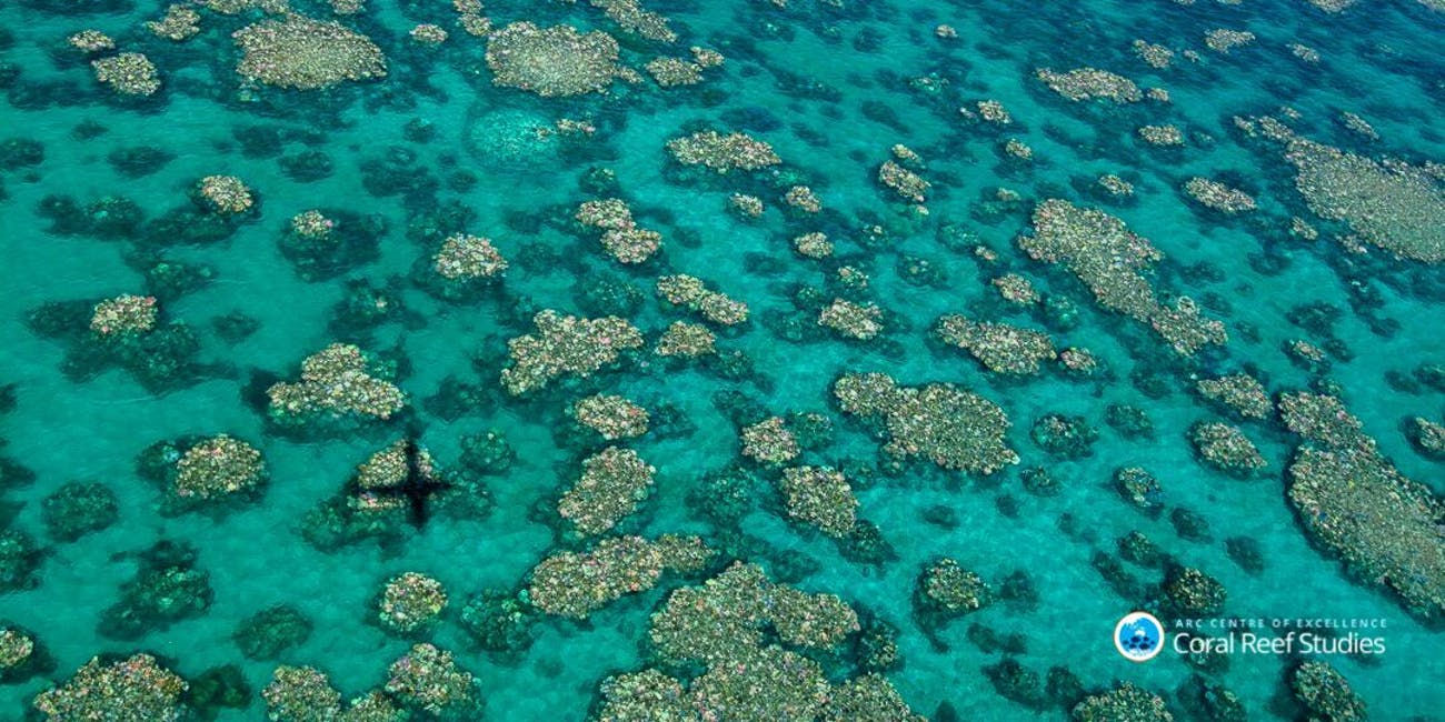 This picture of coral bleaching was taken of the Great Barrier Reef in March 2017.