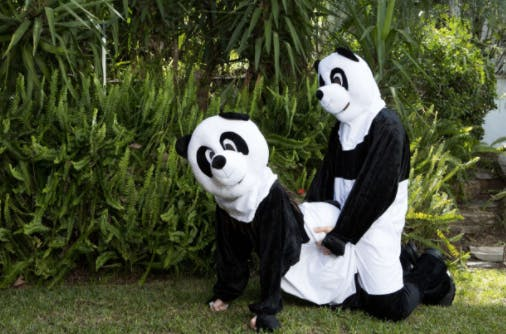 Porn Panda grote lul & kleine poesje