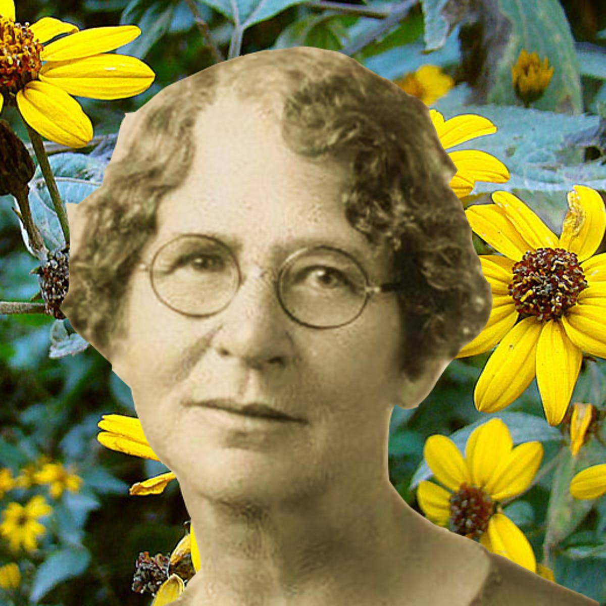 Ynés Mexía: Pioneering Botanist, Late Bloomer, Discovered This Flower