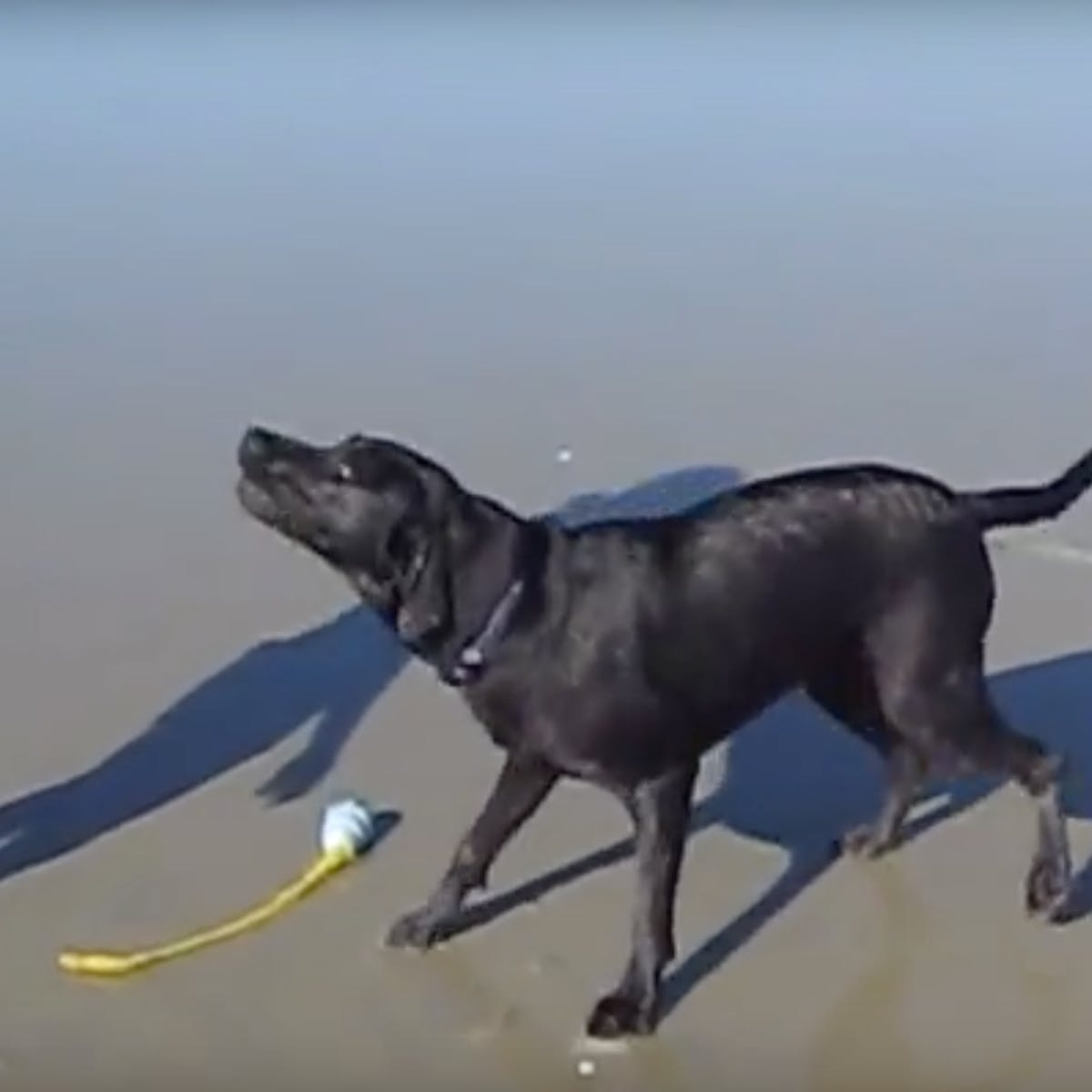 The Viral Video of Dog Squirting Butt Water, Explained by