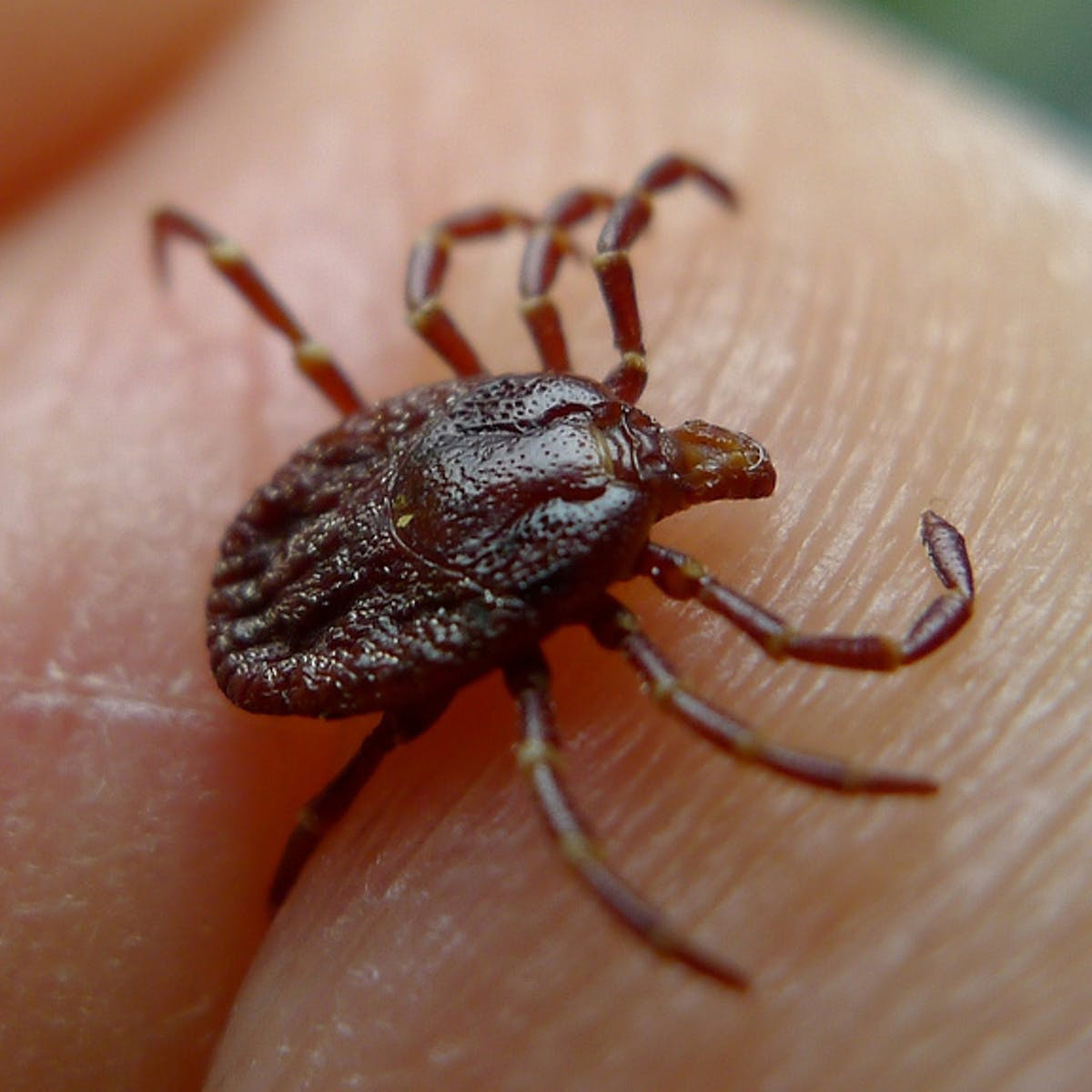 A Plague of Ticks Is Coming: Strategies to Avoid Lyme Disease This Fall