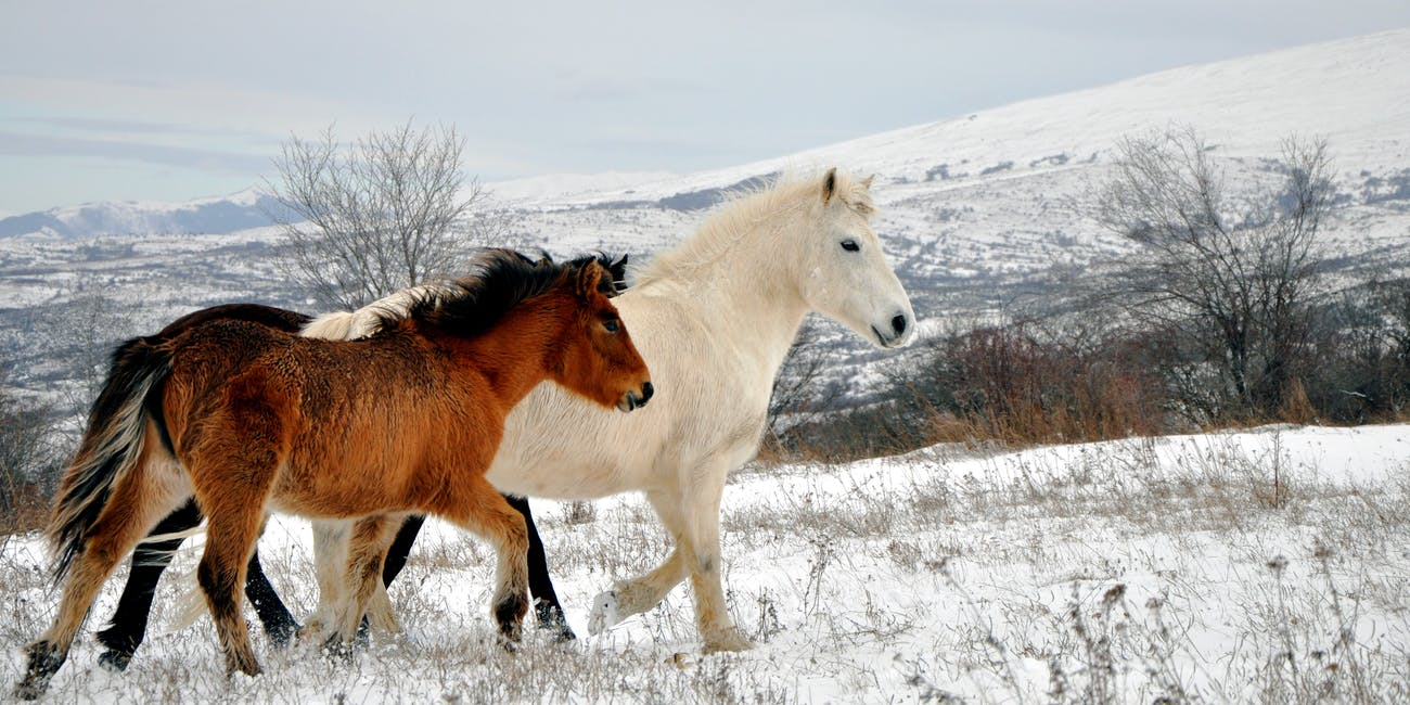 Wild horses, Šar Mountains