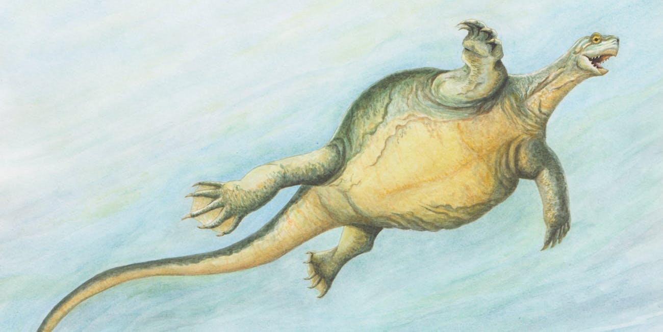 Illustration showing what Eorhynchochelys would have looked like in life, which is to say very pleased with itself.