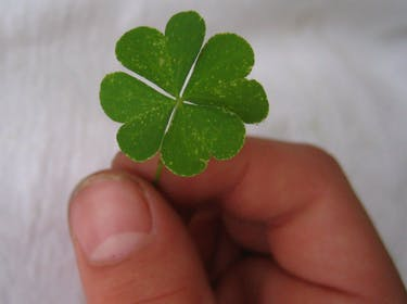 Nature Doesn't Want You to Find 4-Leaf Clovers