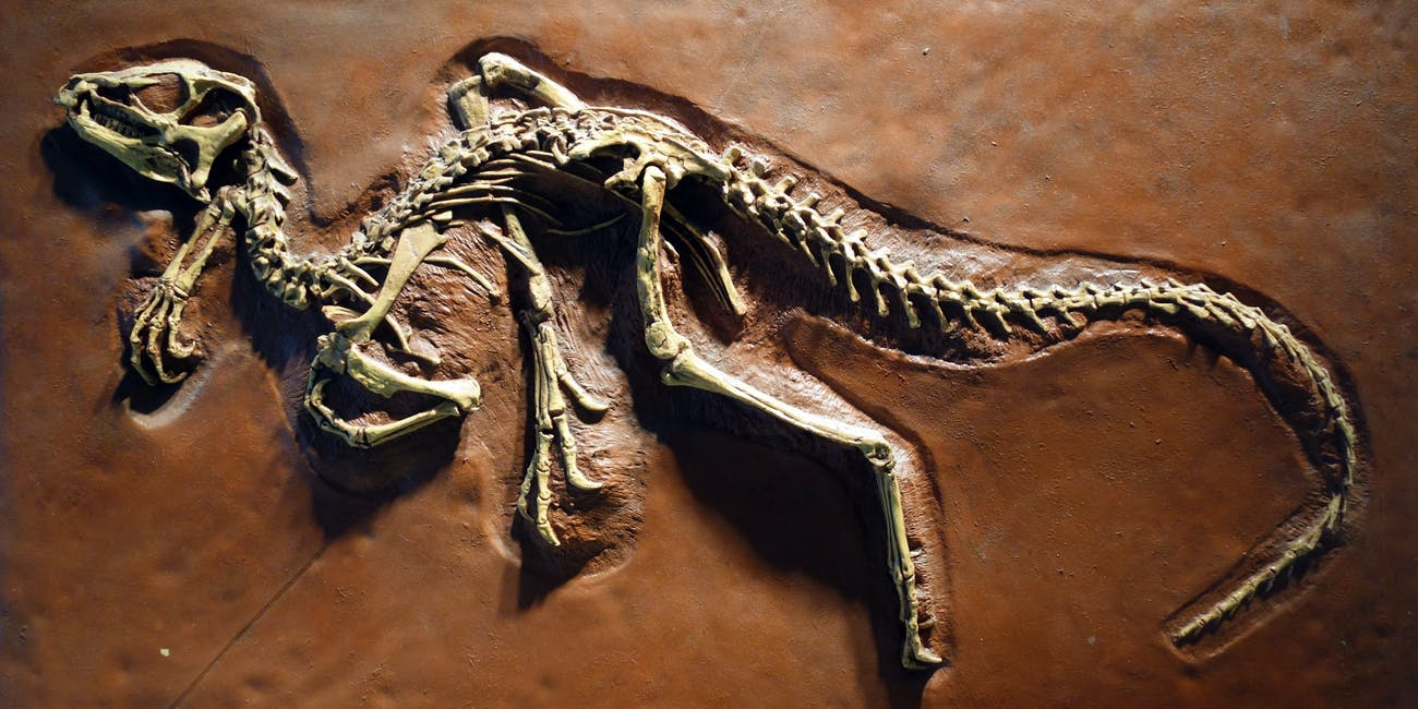 paleontology and dinosaur discovery