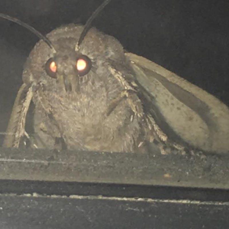 the-moth-meme-all-started-on-reddit.jpeg