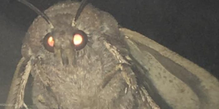 moth meme from reddit