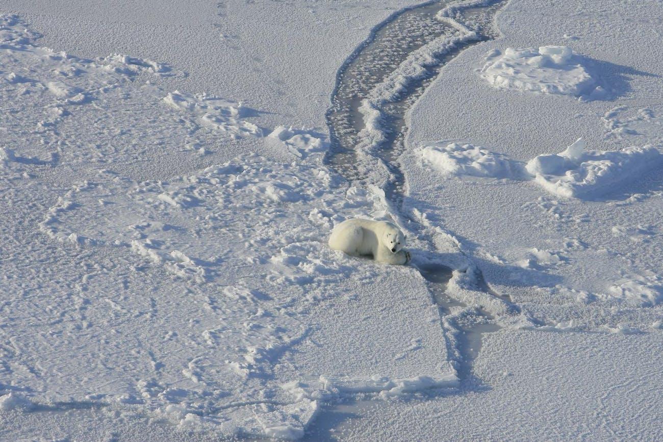 polar bear hunting seal USGS