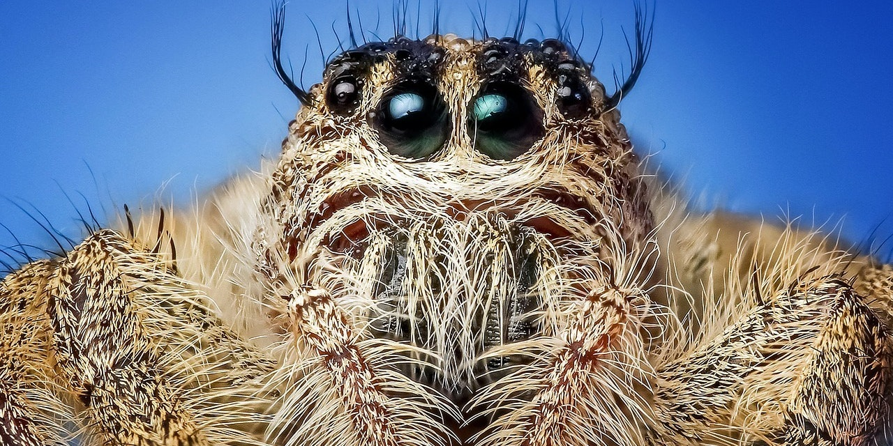 Jumping Spiders Can See Galaxies Far, Far Away