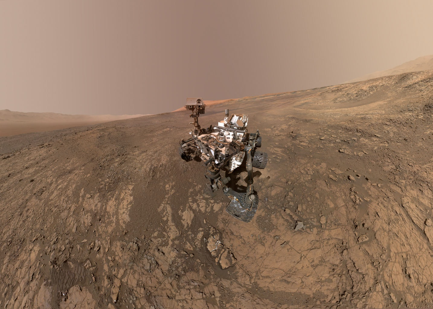 A dried tree was discovered on Mars
