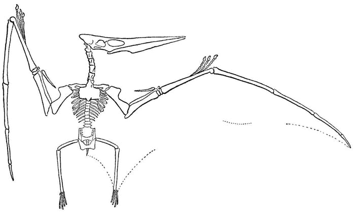 The Pteranodon lived during the Cretaceous period, the 79-million year period that began 145 million years ago.
