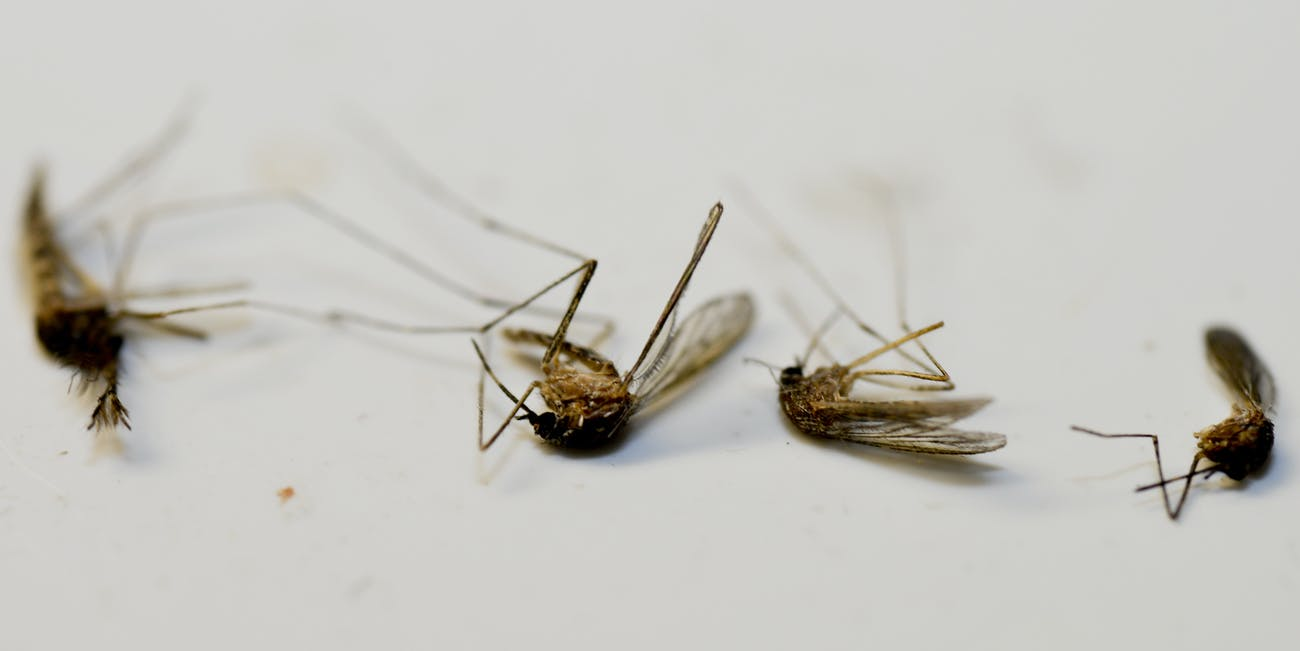 mosquitoes dead repellents