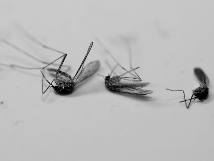 mosquitoes dead repellents
