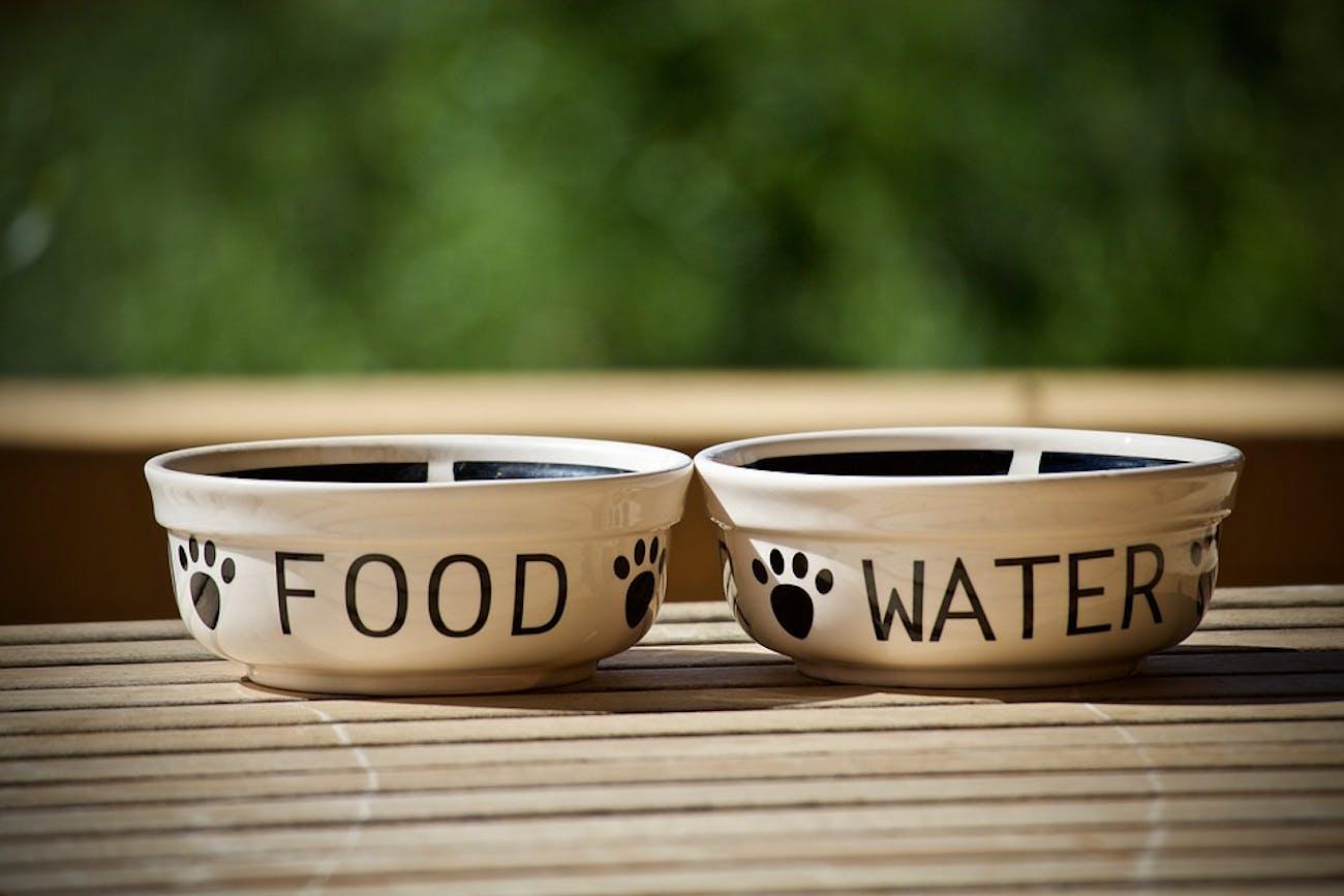 empty pet bowls